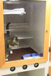 A visitor enjoys the kitty condos.