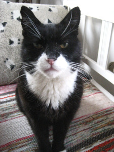 Mora, an 18-year old cat