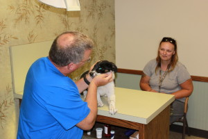 Dr. Eggert performs a wellness exam on a patient at Riverview Animal Clinic.